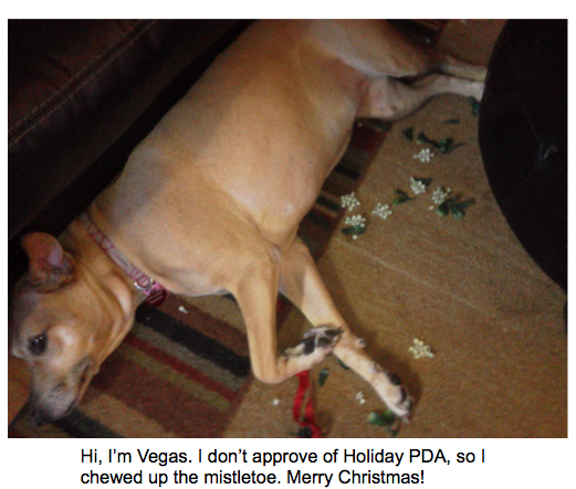Vegas_DogShaming