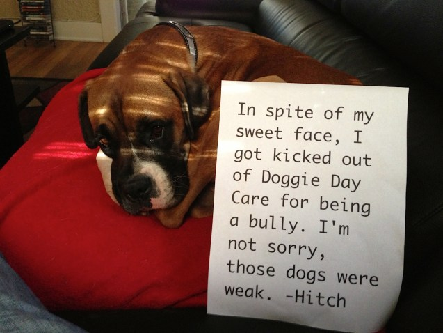 HitchShaming