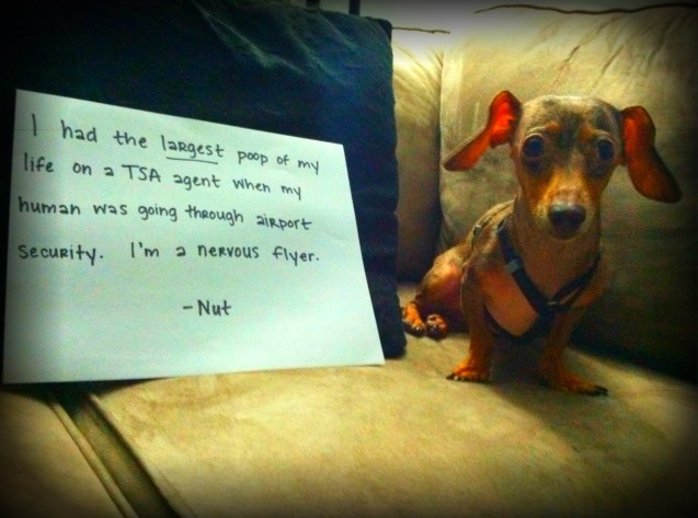 Nut-dog-shaming