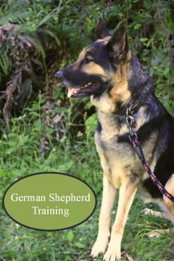 Small Of How To Train A German Shepherd Puppy