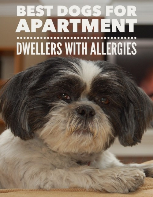 Medium Of Best Apartment Dogs