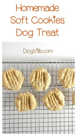Small Of Treat A Dog