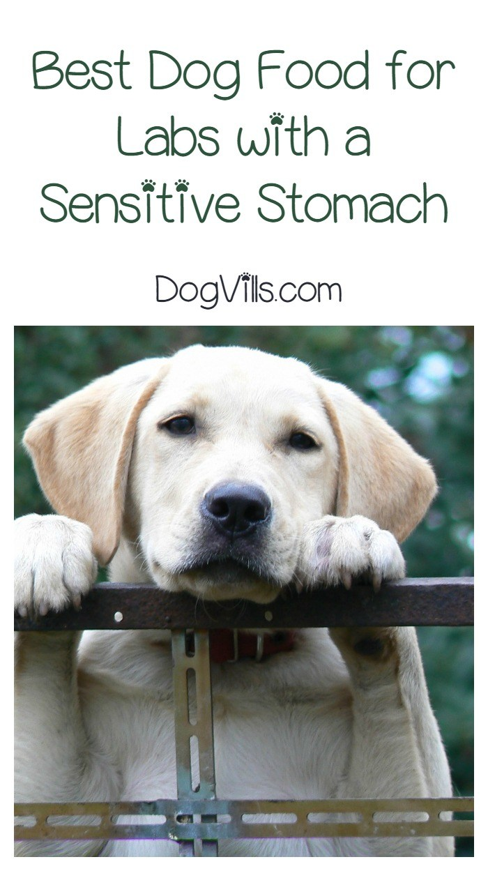 Engaging Allergies Dog Food Labs Choosing Dog Food A Sensitive Dog Food Your Sensitive Stomach What Is Dog Food Labs 2018 Labs bark post Best Dog Food For Labs
