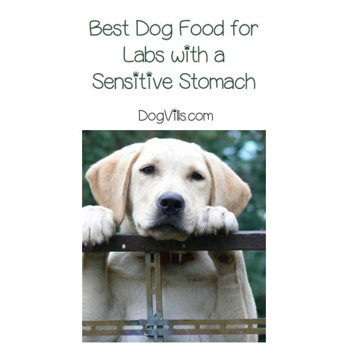 Medium Crop Of Best Dog Food For Labs