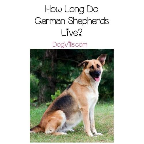Medium Crop Of Longest Living Dogs