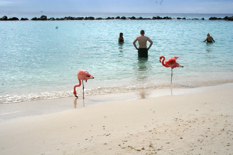 Quel caraibi che va aruba dolce vita travel magazine for Ibiza a maggio si fa il bagno