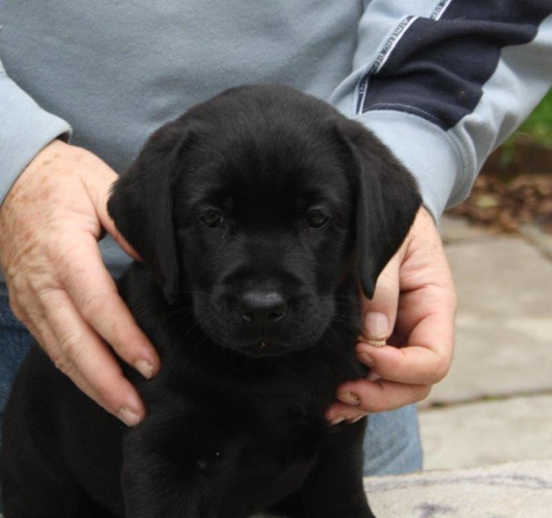 Dolwen puppy