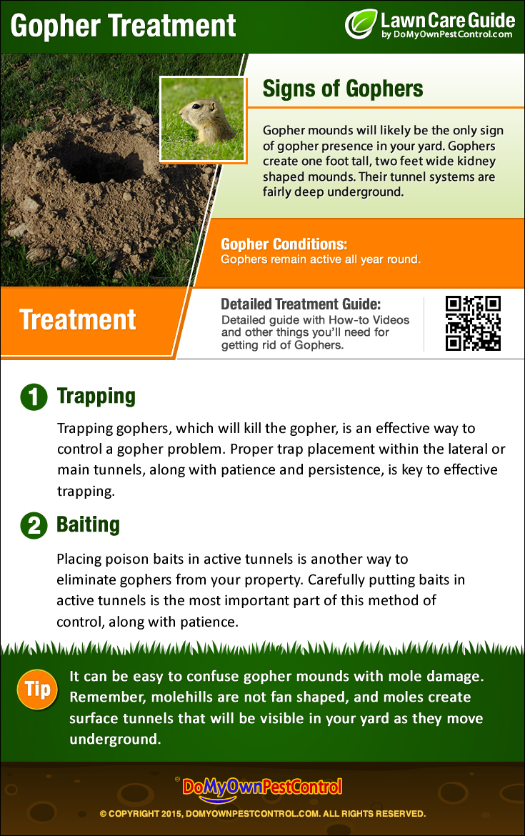 Fullsize Of How To Get Rid Of Gophers ...