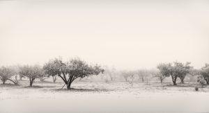 Oak Glen Apple Orchard