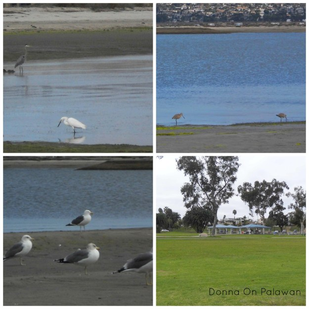Birds at Mission Bay