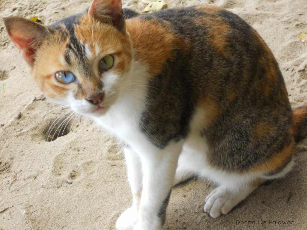 nagtabon-beach-cat-3-eye-colors