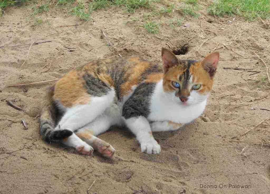 nagtabon-beach-cat
