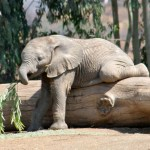Z is for Zoo – San Diego Zoo