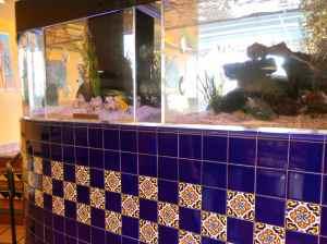 rubios-fish-tank