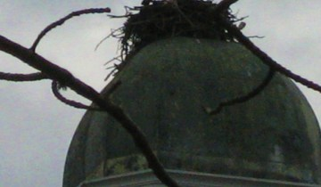 crows nesting on top of school