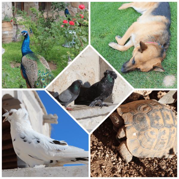 museum_hotel_animals