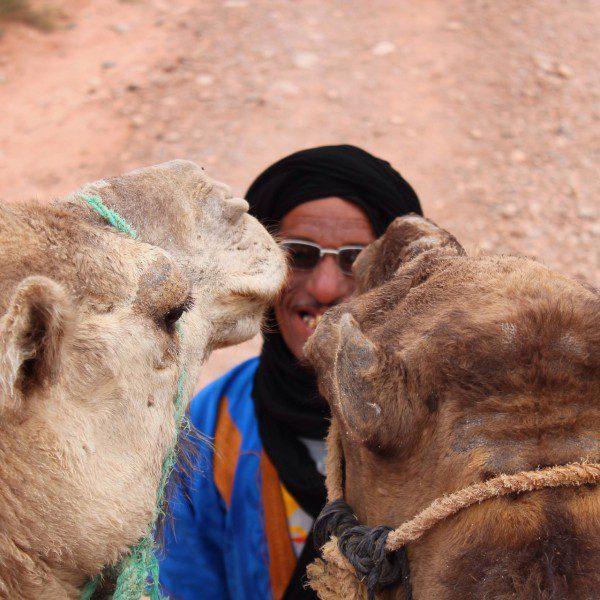 ait ben haddou camelo