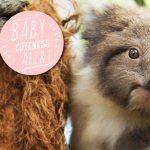 Baby Joy at Healesville Sanctuary