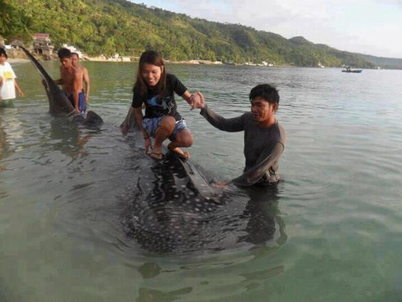 bestias maltratando a un tiburón ballena