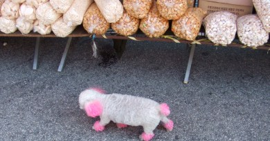pink dog