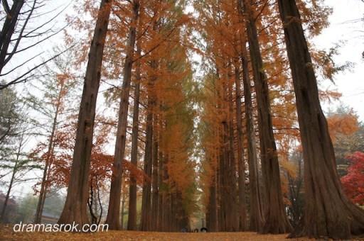 Nami trees