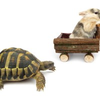 Finding the Turtle Within: Slowing Down in the Face of Anxiety