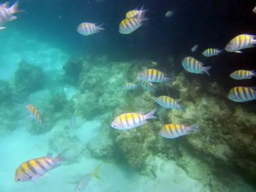 marinarium fish excursion punta cana