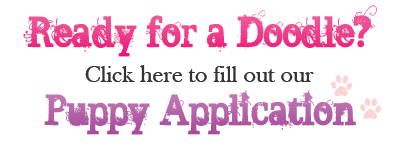 Dreamydoodles Puppy Application