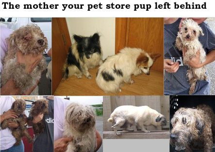 Pet Stores In Portland Oregon That Sell Dogs