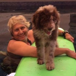 Kula - Male Aussiedoodle from Daisy and Rally