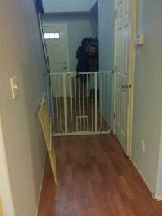 Carlson 0941PW Extra-Tall Walk-Thru Gate with Pet Door