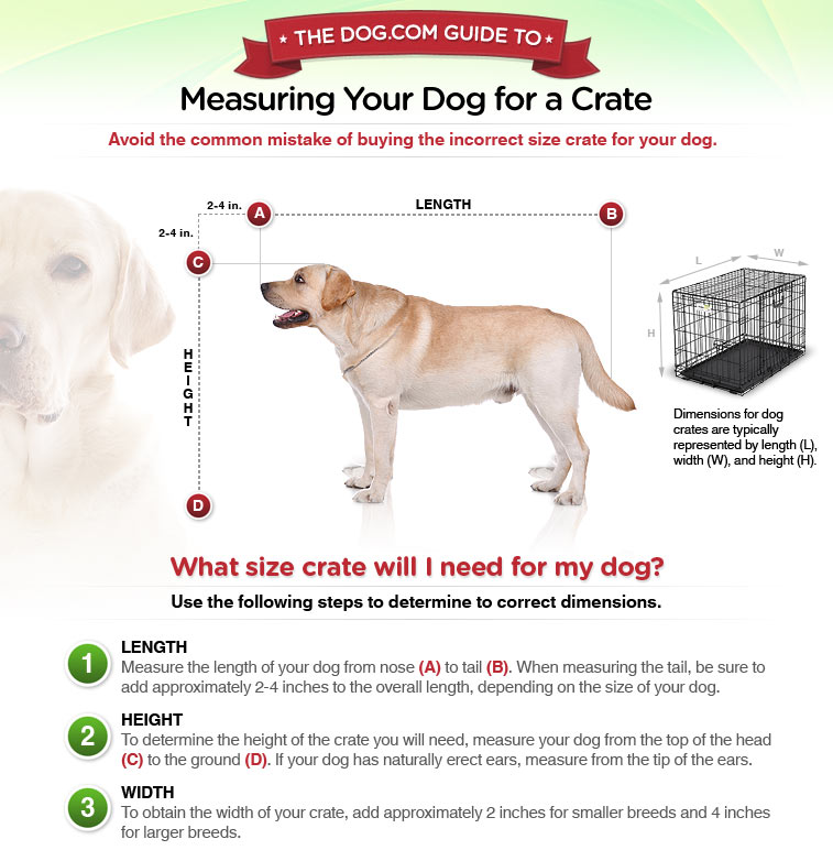 How To Measure Your Dog Aussiedoodle And Labradoodle