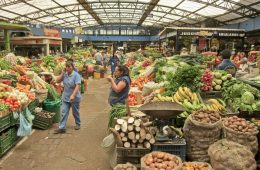 Fruit Market - Bogota, Colombia.