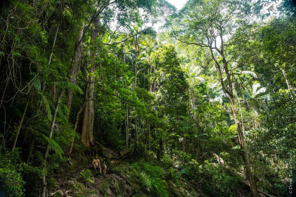 Mount Cougal National Park, Queensland, Australia