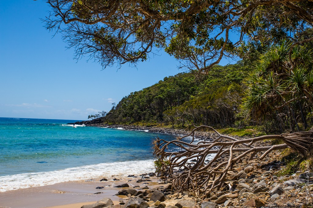 Winch Cove, Noosa National Park