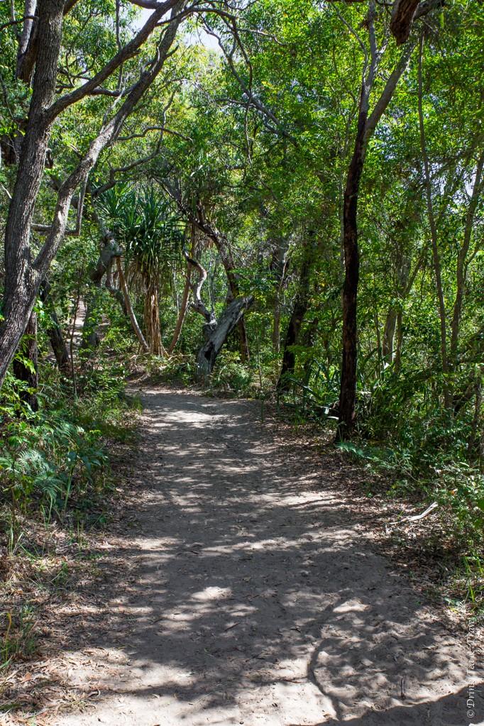 Along the Alexandria Bay track, Noosa National Park