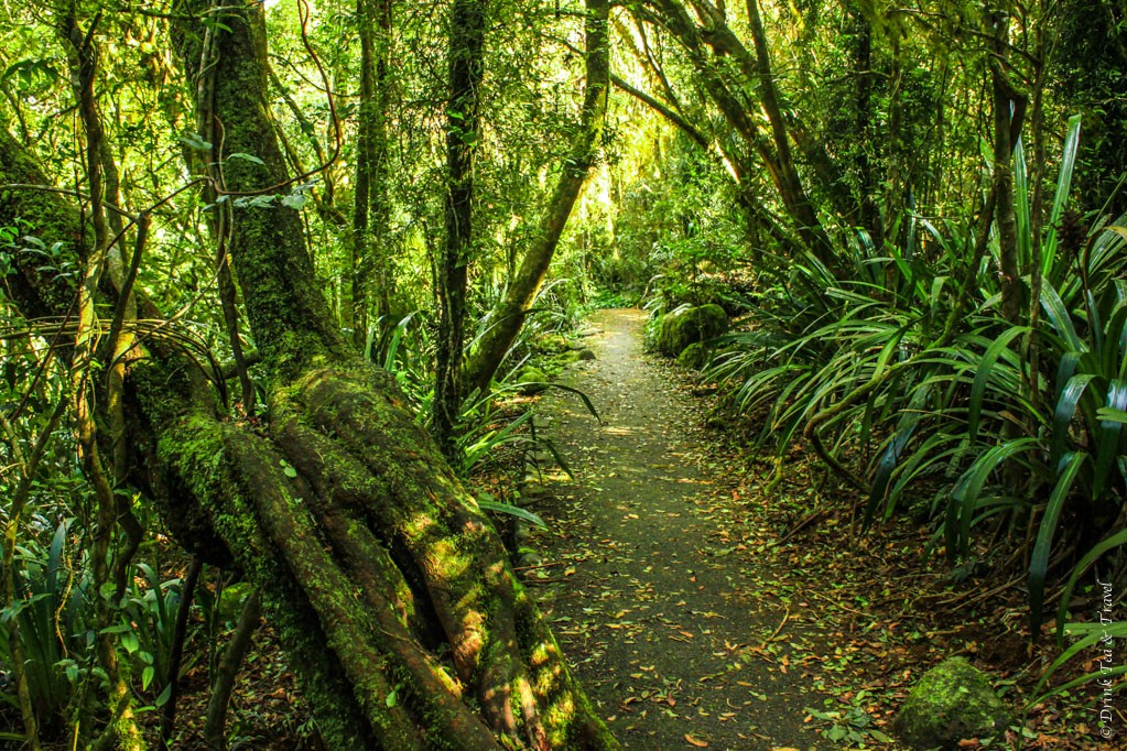Along the Best of All Lookout track in Springbrook National Park