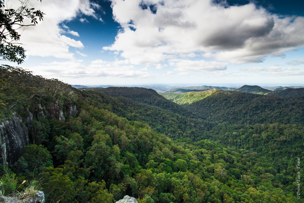 View from the Canyon Lookout, Springbrook National Park