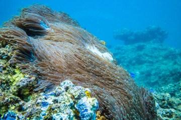 Ningaloo Reef, Exmouth. Western Australia. Cover Photo