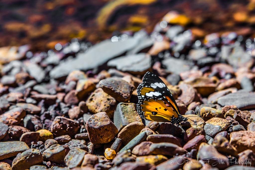 Butterfly in Karijini National Park. Western Australia