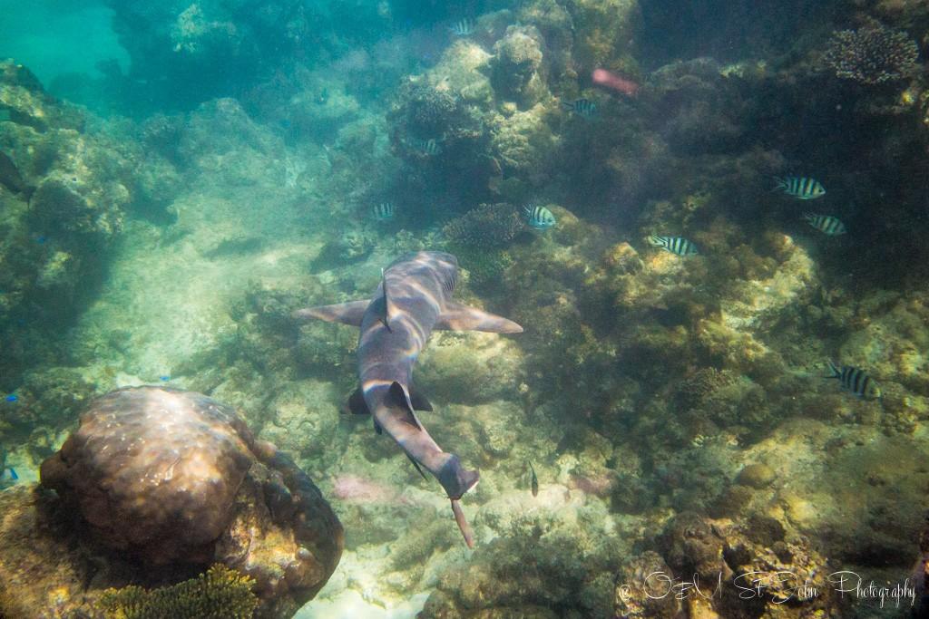 Ningaloo Reef. Exmouth. Western Australia