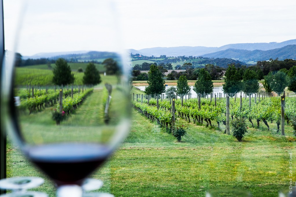 Glass of Pinot Noir with a view at Oakridge Winery