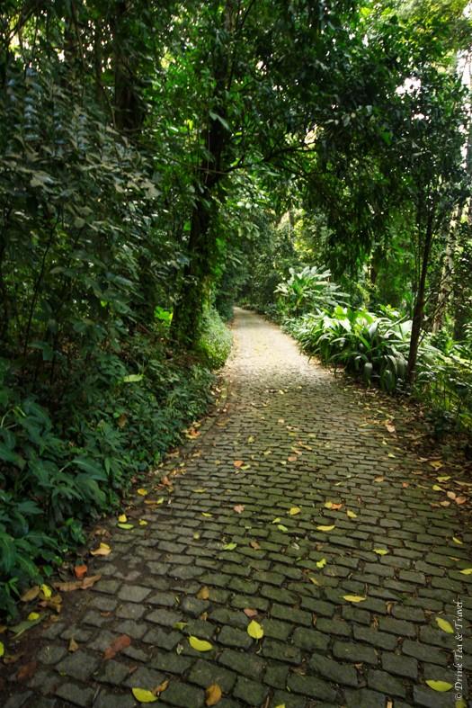 Inside Parque Lage, Rio de Janeiro