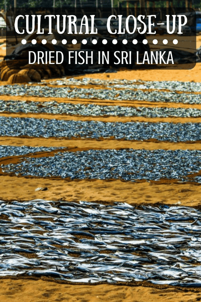 Dried fish is a common protein source in Sri Lanka. Here, at the Negombo Fish Market, you can see the fish drying process for yourself.