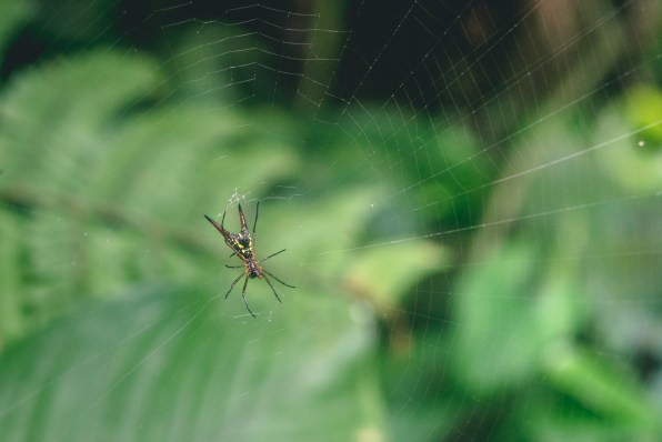 costa-rica-arenal-national-park-4088