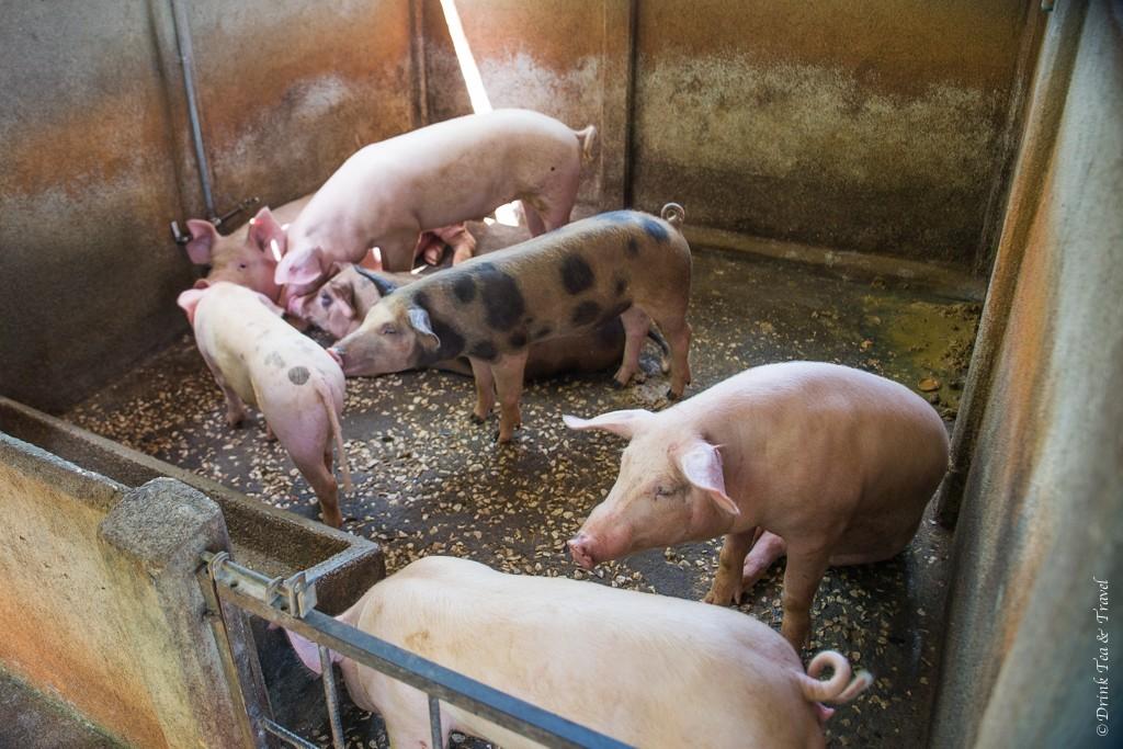 Pig barn in Brasilito, Costa Rica