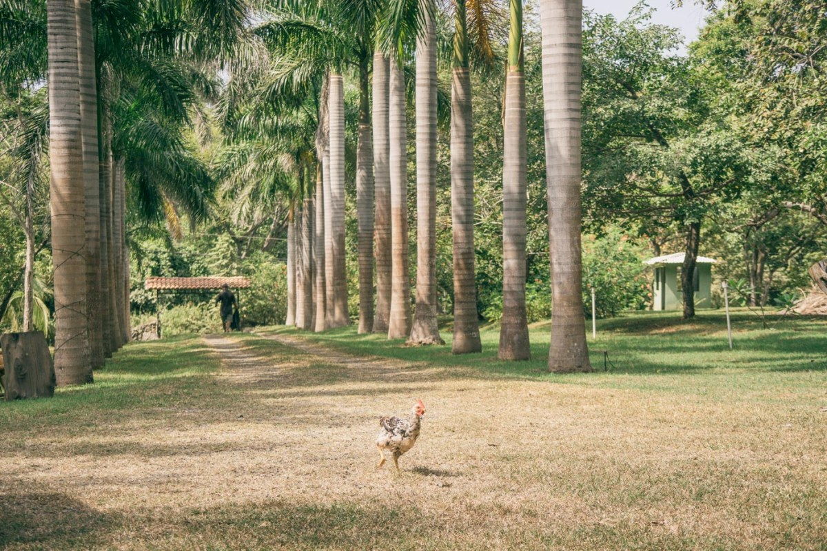 Backyard..aka reception venue. Nothing but a few palm trees and some chickens...