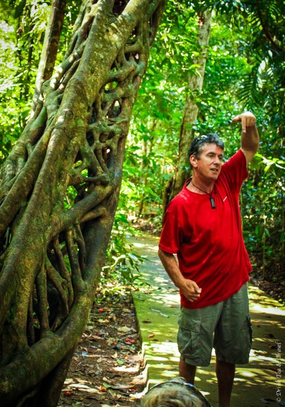 Following our guide through the Daintree Rainforest