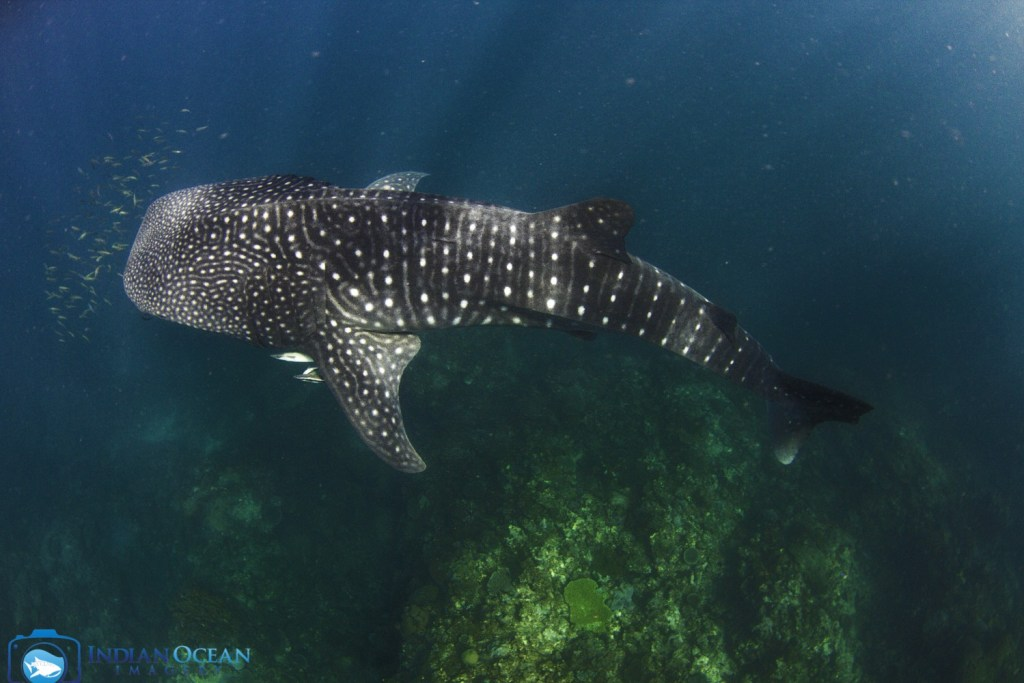 Photo by Indian Ocean Imagery courtesy of Kings Ningaloo Reef Tour