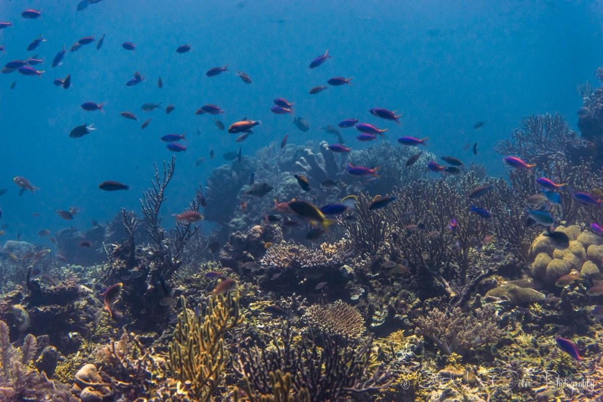 Diving in Komodo National Park. Siaba Kecil